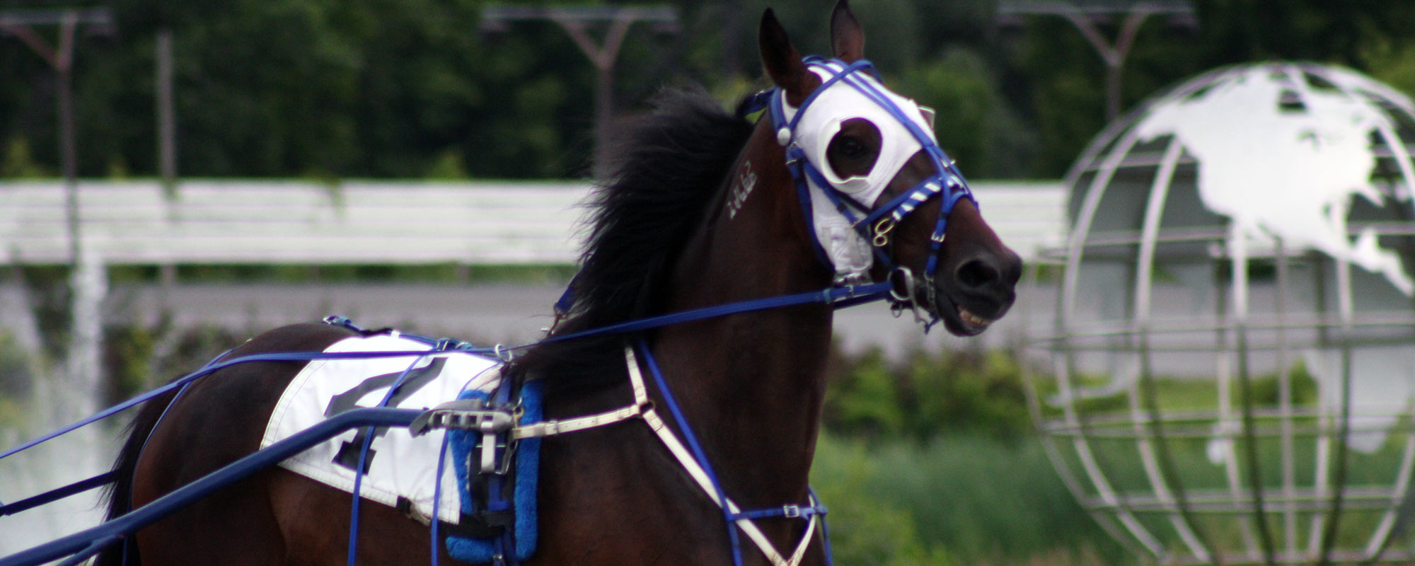 Live Horse Race Streaming at our Ottawa Casino